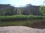 Река Ингода — не сгоревший в пожарах лес на прибрежных сопках пострадал от браконьерского топора | Чита